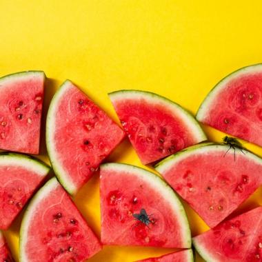 Flies on watermelon