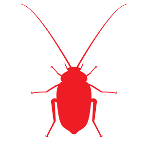 Cockroach in Singapore