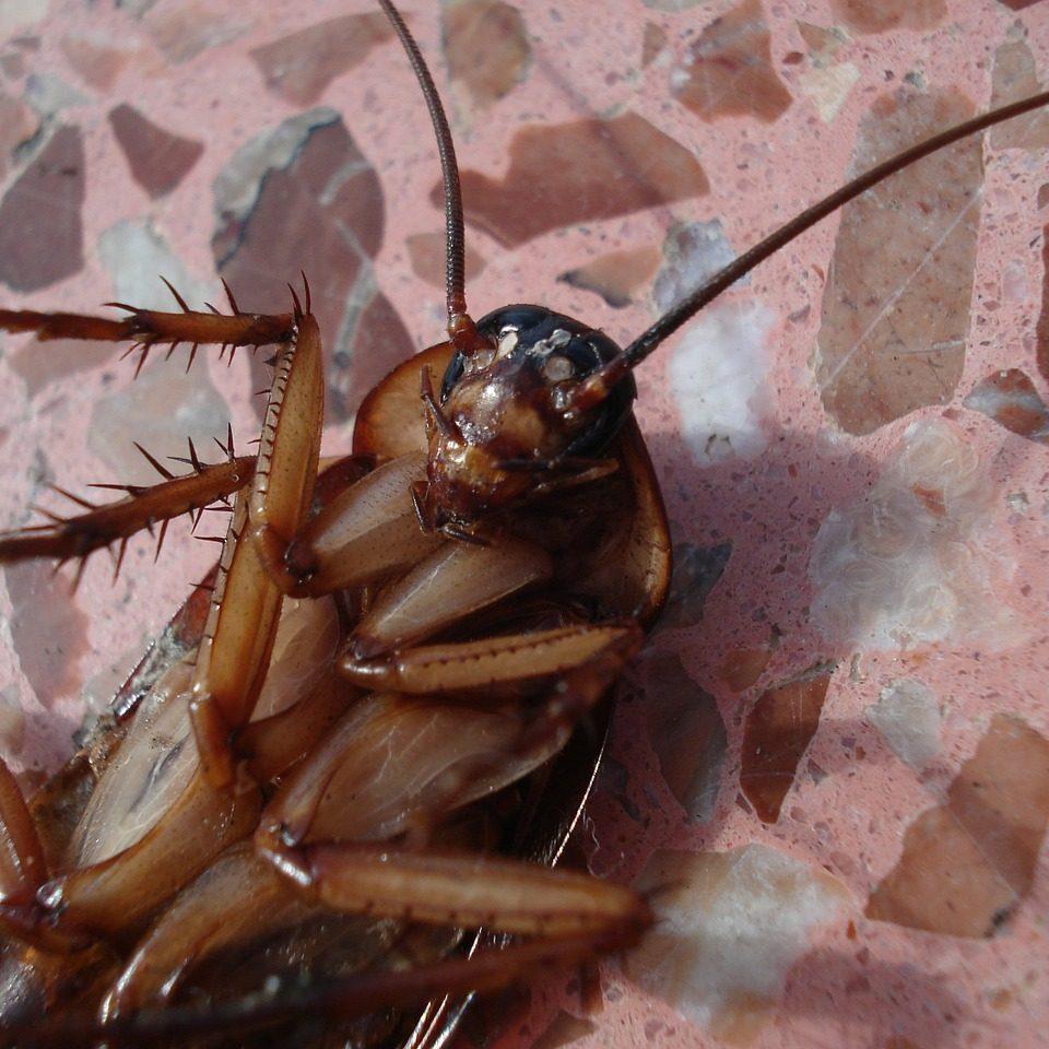 Cockroach Pest Control Service in Singapore